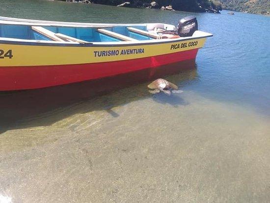 Rio Negro, شيلي: Linda Tortuga en Caleta Condor!!!