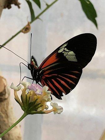 Stratford-upon-Avon Butterfly Farm Photo