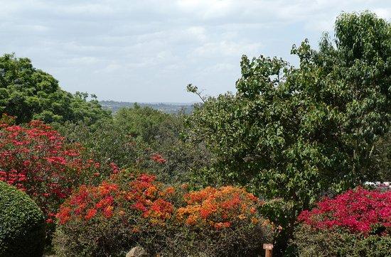 Aberdare Country Club: De fantastiske farvestrålende blomster ud den fænomenale udsigt
