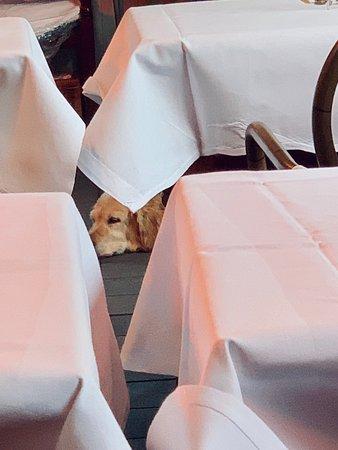 Dog friendly dinner