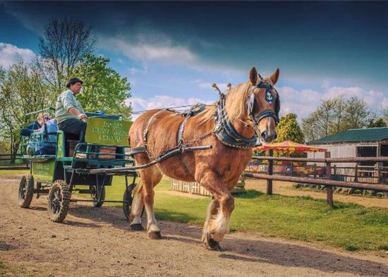 Verwood, UK: Uno Suffolk Punch