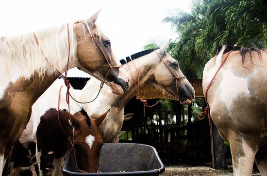 Indiana Horse Tours