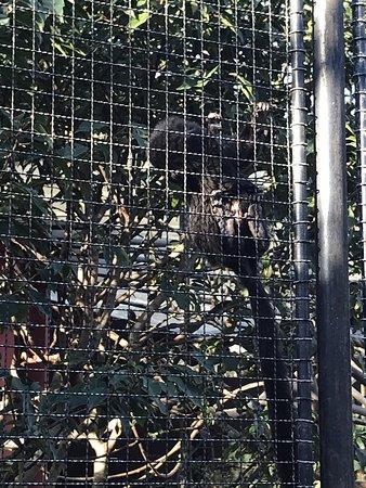 Menagerie, le zoo du Jardin des Plantes Photo