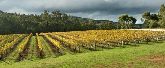 Nannup, Австралия: Post harvest, vines are starting to shutdown...