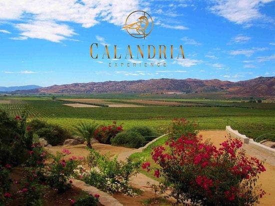 Calandria Experience