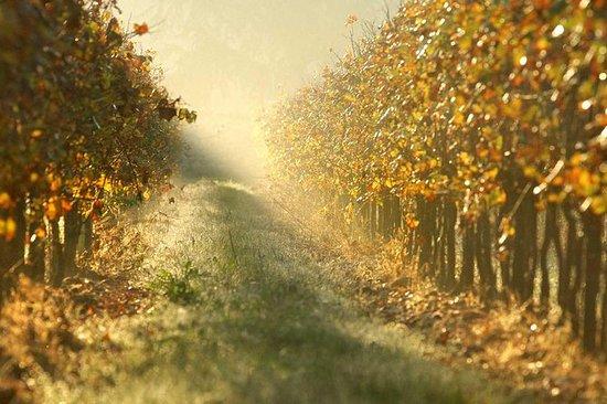 Degustação de vinhos Franciacorta e...