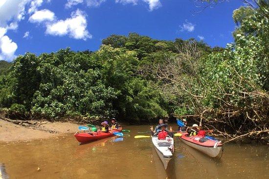 Iriomote Island Easy canoeing and...