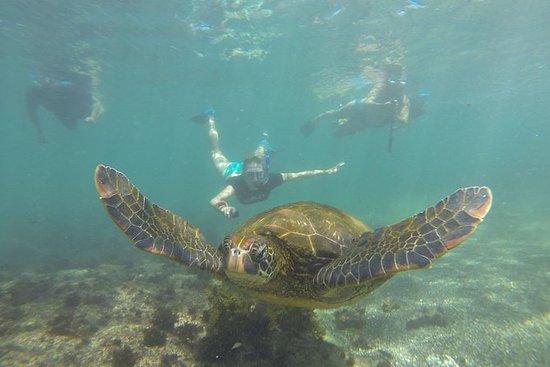 Los Tuneles Snorkeling Day Tour