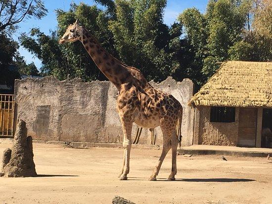ラ・オーロラ動物園入場券