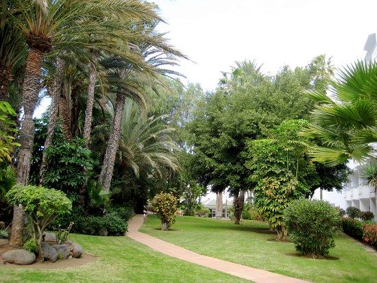 Abora Catarina by Lopesan Hotels: Gartenbereich