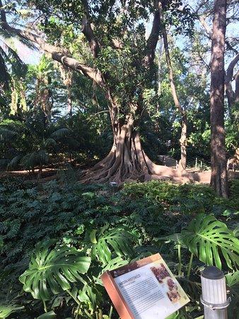 Jardin Botanico Historico La Concepcion Malaga 2019 All You Need
