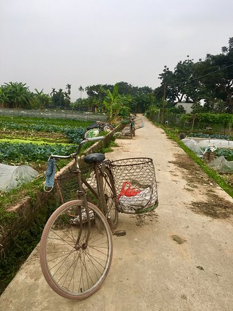 Hanoi Countryside Motorbike Tour- 5 hours: in the vegetables fields.