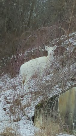 This was one of the white deer on the side of an igloo. Igloos are where they stored ammunition. We were able to go inside one of the igloos.
