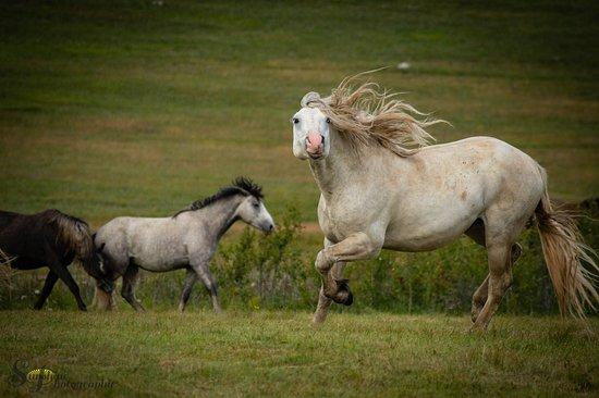 Livno Wild Horses Adventure Tours: Livno Wildhorses