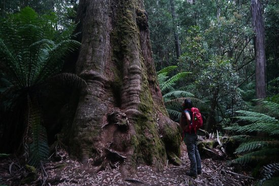 Giant Tree Expeditions