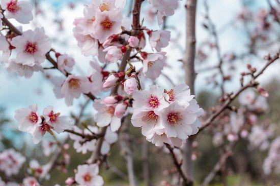 Santa Agnès de Malanyanes, España: В Испании постоянно что-то цветет💐. Нет такого, чтобы был хоть какой-то период времени, когда нет совсем никаких цветов. И стало новым трендом охотиться за цветущими полями. По этому поводу, предлагаю наш выездной Инстаграм 📸 фото-тур за лучшими цветущими весенними видами.  КОГДА И ГДЕ ЛОВИТЬ ЦВЕТУЩИЕ 🌷ИСПАНСКИЕ ПОЛЯ ДЛЯ ШИКАРНЫХ ФОТОК? Читайте на сайте reveltravel.ru