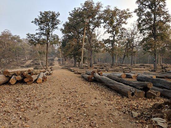 Timber Depo