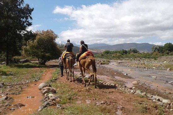 Atlas Mountains dagstur Camel Ride