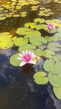 Laurel Bank Park: A peaceful place to visit.