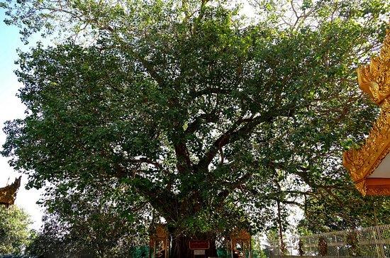 Shwedagon Pagoda: Bodhi Tree.