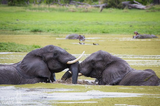 Moremi Game Reserve, Botswana: Our latest Leopard Safari