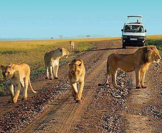 Cynko Africa Expeditions