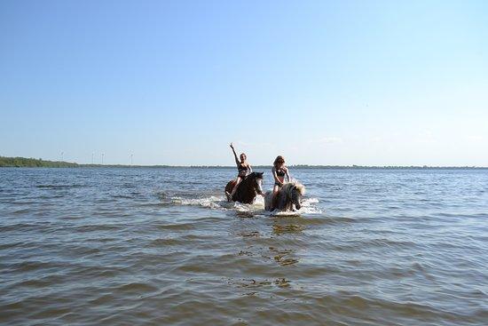 Gross Wittensee, ألمانيا: Mit den Ponys im see