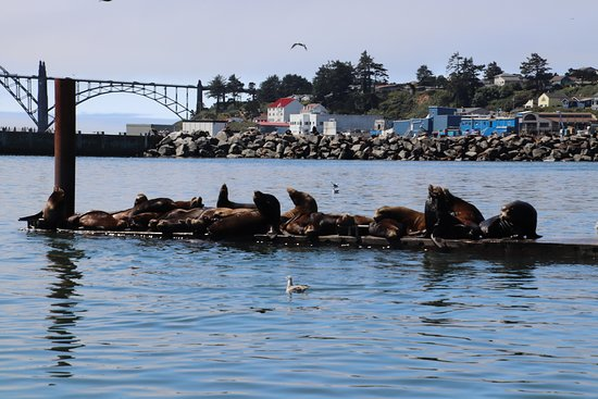 Newport's Historic Bayfront: Don't forget the seals