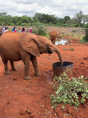 David Sheldrick, Giraffe Centre and Bomas of Kenya Full-Day Tour from Nairobi: baby elephant playing.