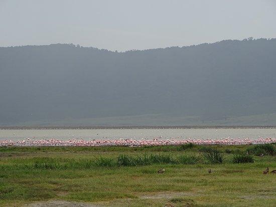 Gosheni Safaris Africa: Pink flamingos  in Ngorongoro Crater.