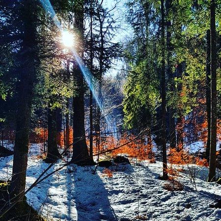 Montricher, สวิตเซอร์แลนด์: Beautiful forest. Swiss mountains !🇨🇭 Superbe forêt dans les montagnes suisses !