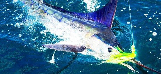 M&L Sport Fishing