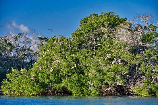 NautiLimo: Bird Island