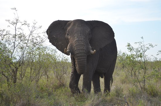 4-Day Kruger National Park Safari from Johannesburg: Face to face with an elephant