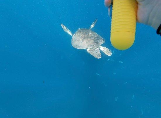 Tenerife snorkelling and kayaking Foto