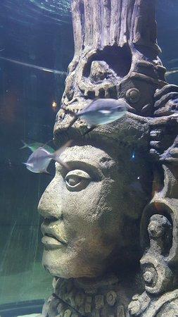 Faux Mayan ruins in the aquarium