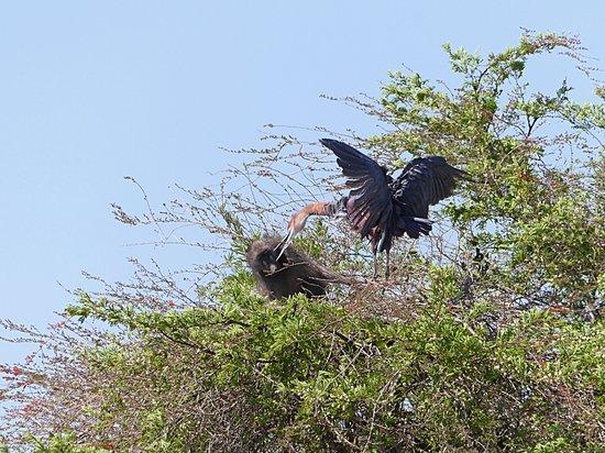 Nelspruit, Südafrika: 3