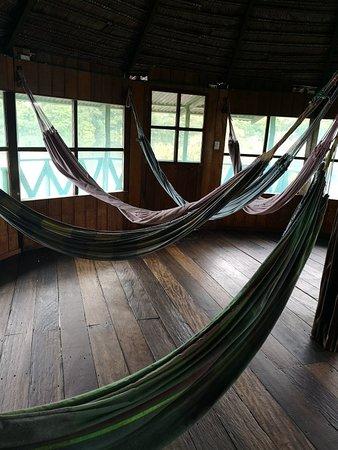 Amazon Jungle Trips Photo