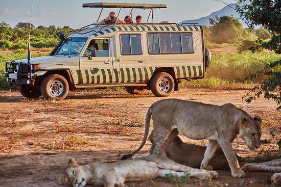 Rhino Safaris