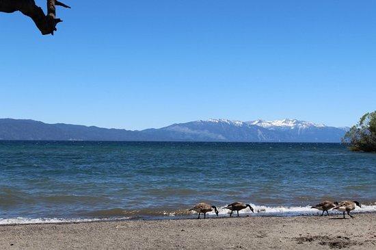 Tahoe City, CA:  Lake Forest Beach
