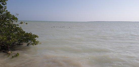 Vista de la bahía.