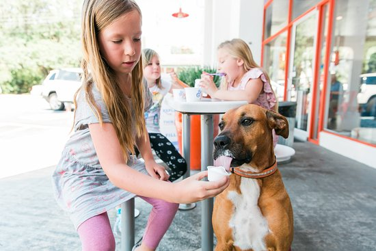 Fuse Frozen Yogurt: Bring your dog to our porch- we offer free pup cups upon request daily!