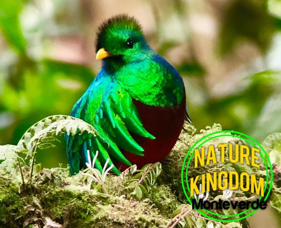 ‪‪Nature Kingdom‬: Quetzal Monteverde, Costa Rica.‬