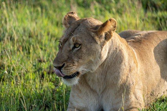 iTravel Safari & Expeditions