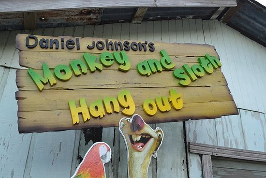 Daniel Johnson's Monkey & Sloth Hang ...
