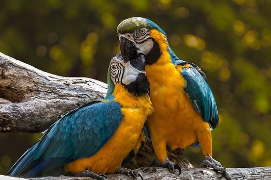 Zoo di Pafos