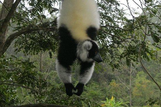 Tour de vida silvestre de Madagascar...
