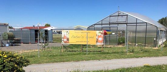 Gmund, Østerrike: Peter's Land im Sommer. Paradeiser