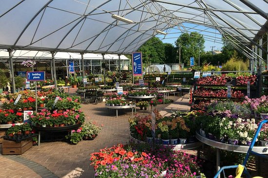 Athlone, Irlanda: At Fernhill we offer an unrivalled selection of premium plants, shrubs and trees and a wide range of garden accessories and plant care. Our team of experts and horticulturalists are also on hand to offer all our customer free advice and gardening tips.