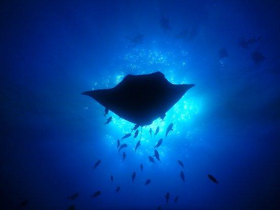 Socorro Island張圖片